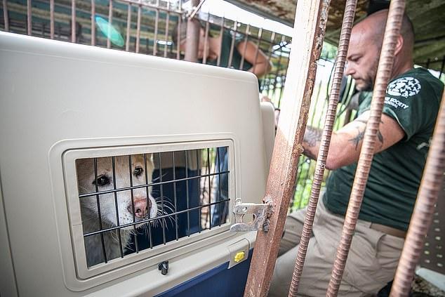 Tin vui trong ngày: Một trong những chợ thịt chó lớn nhất Hàn Quốc cuối cùng cũng đóng cửa