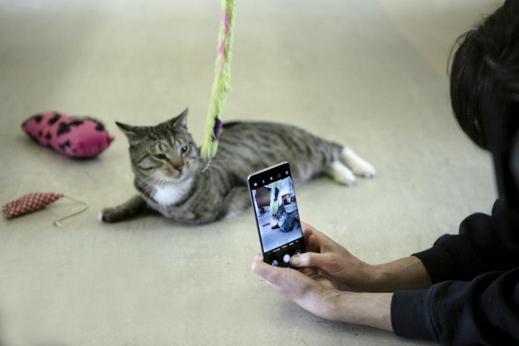 Nhiều người không muốn nhận nuôi thú cưng nếu chúng... không ăn ảnh