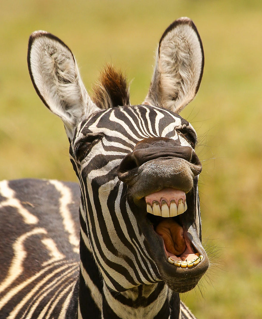 Chùm ảnh 'thiên nhiên hài hước' sẽ thắp sáng một ngày của bạn