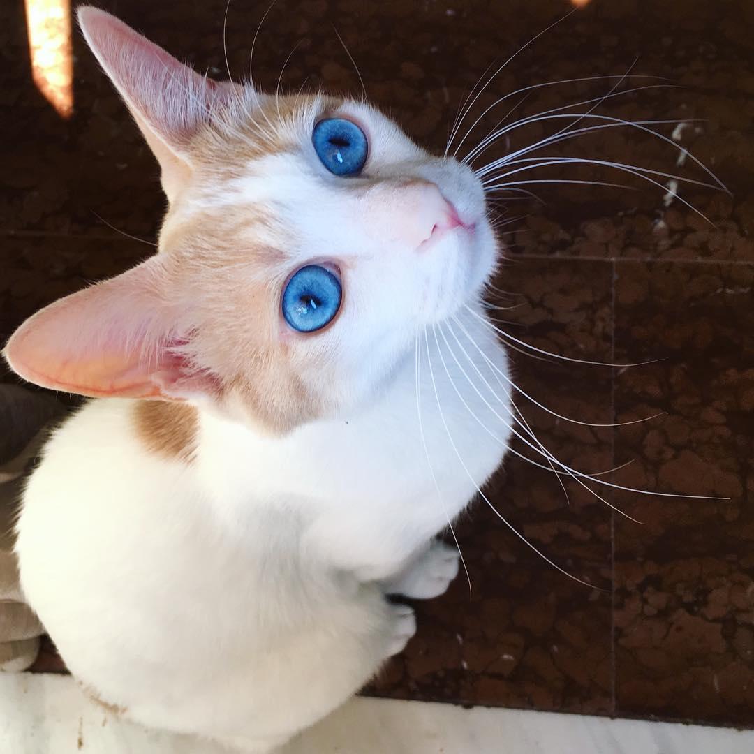 'Chết chìm' trong những cặp mắt mèo đẹp nhất thế giới