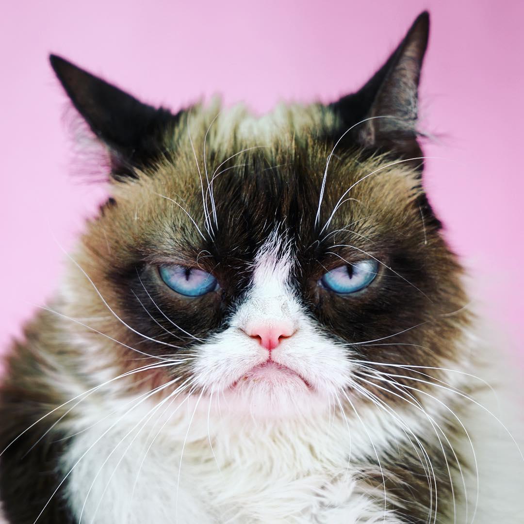 Những tài khoản Instagram chó mèo còn nhiều lượt theo dõi hơn cả bạn