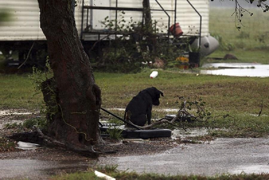 Chùm ảnh thú cưng được cứu sống trong trận bão Harvey