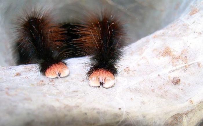 Ú na ú nu, xinh xinh lắm lông, cứ tưởng chân mèo nhưng hóa ra là...