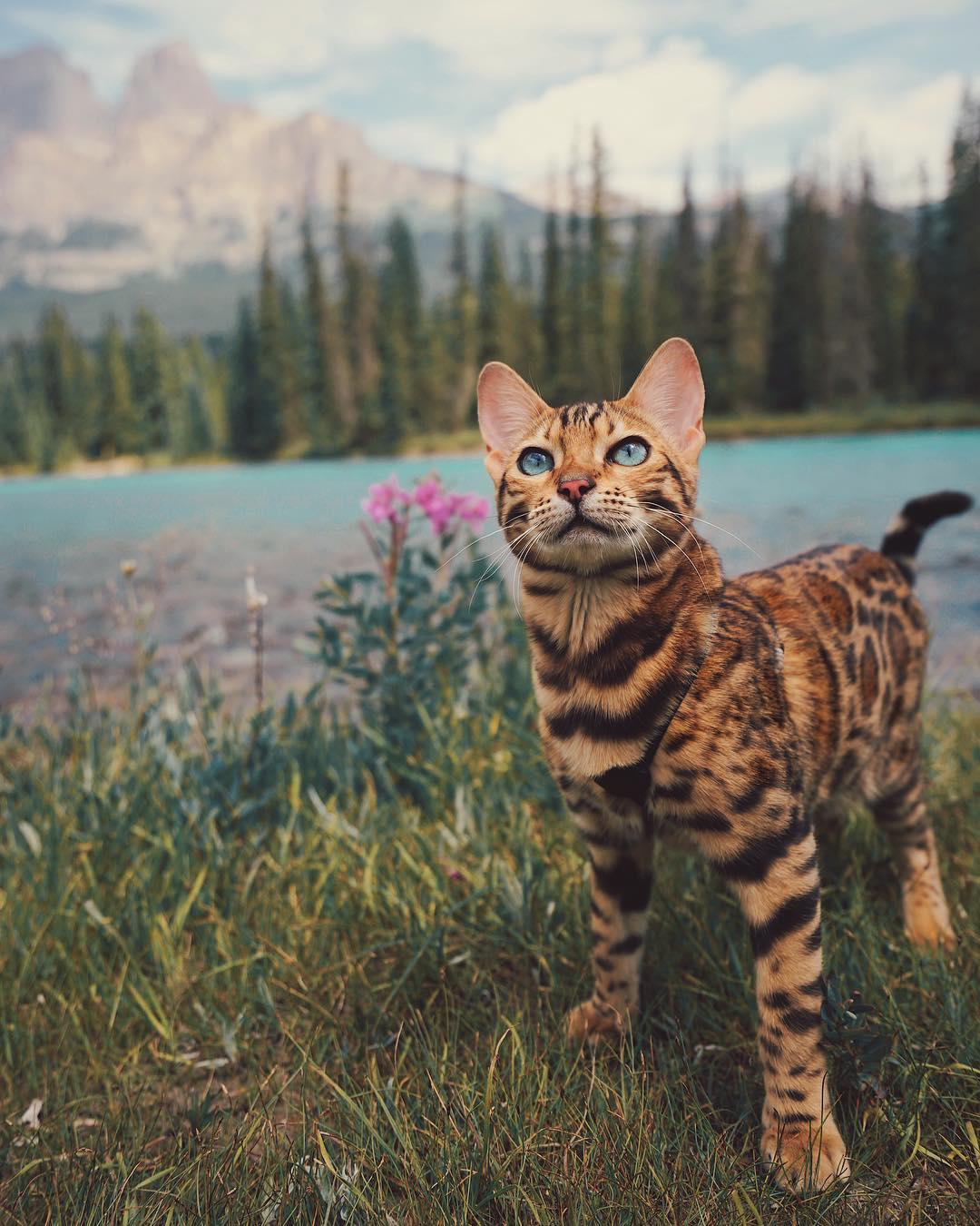 Gặp Suki - Cô mèo có vẻ ngoài xinh đẹp và cuộc sống bao người mơ ước