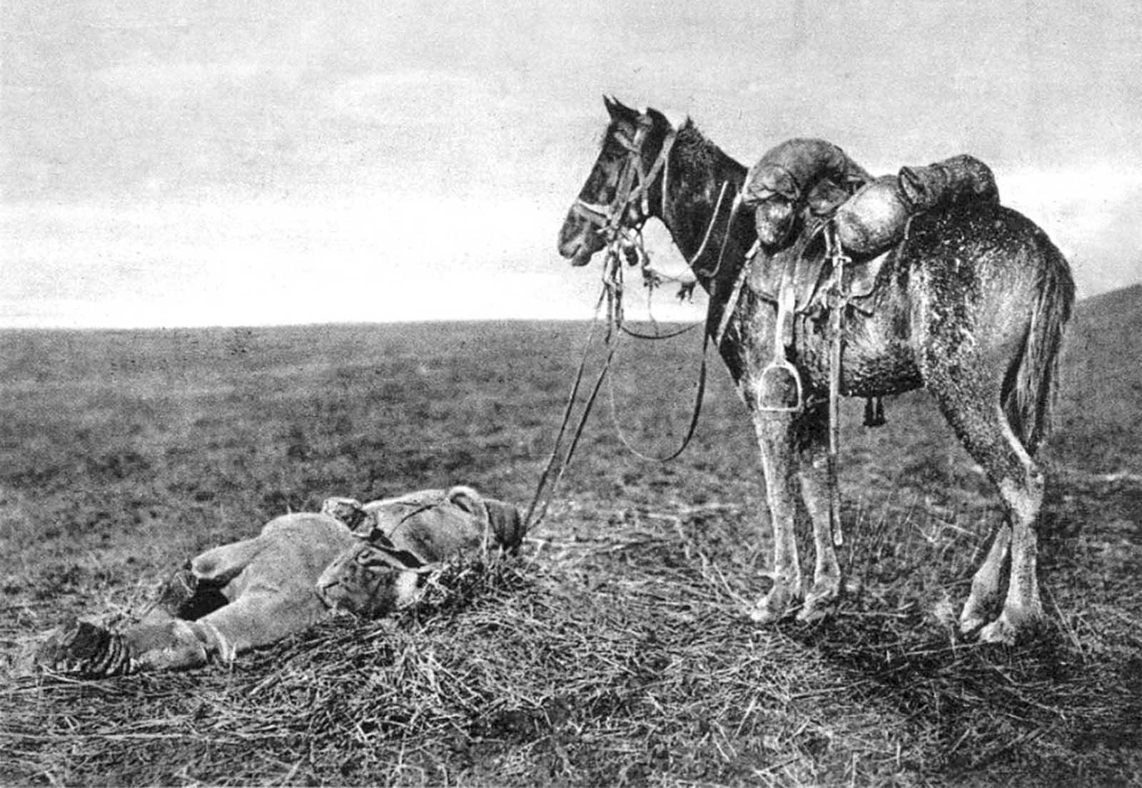 Loạt ảnh hiếm về số phận động vật trong Thế chiến thứ nhất (1914 - 1918)