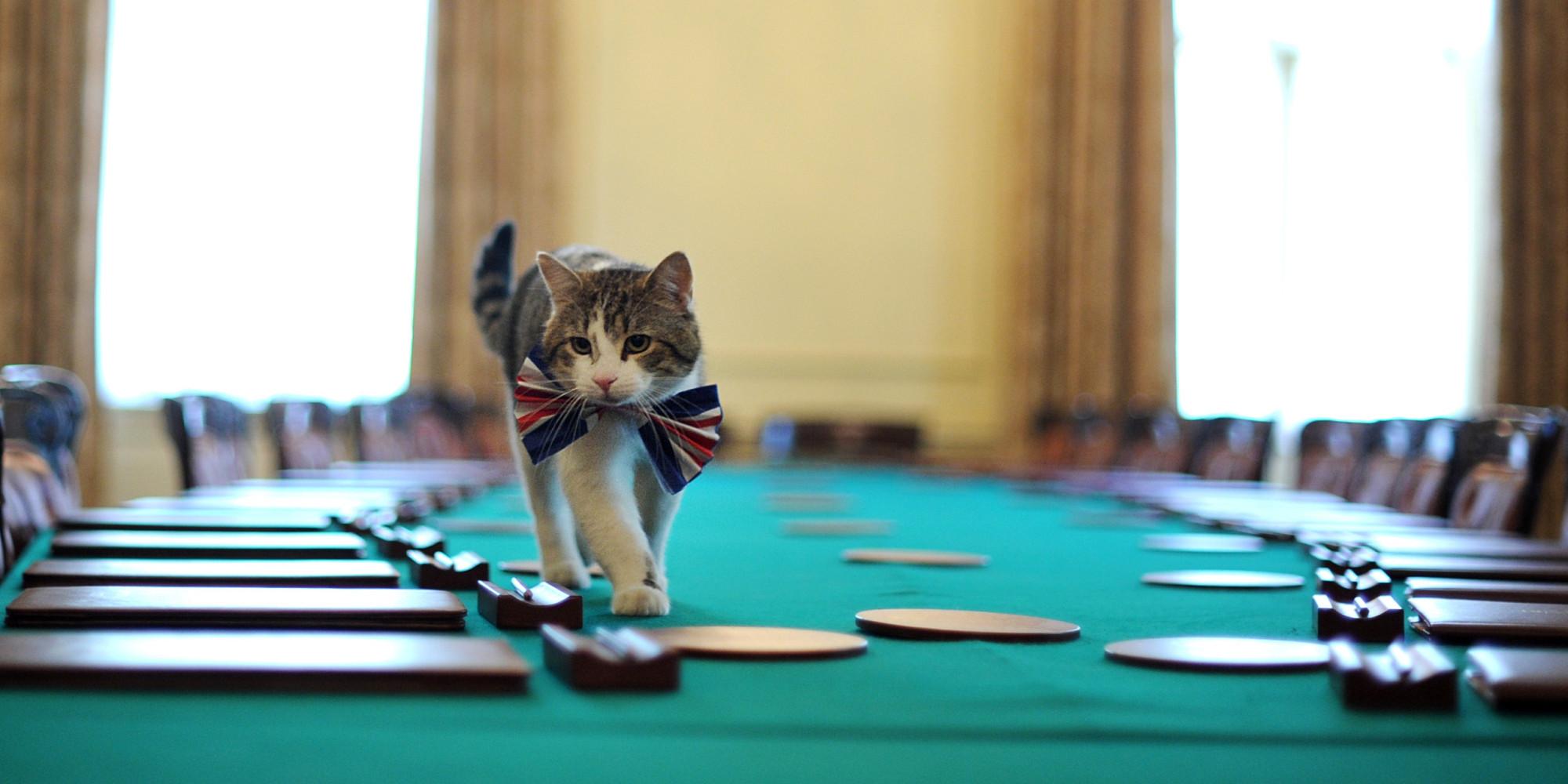 Mèo - một thế lực quyền năng trong các tòa nhà chính phủ Anh