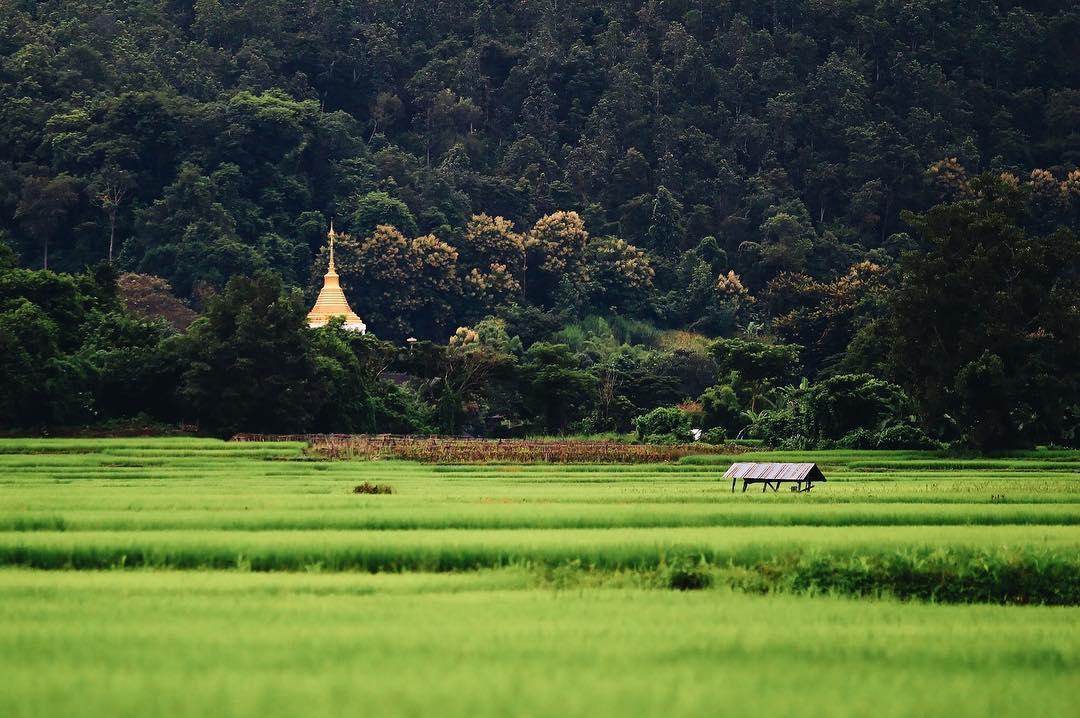 Bangkok và Chiang Mai, nếu phải chọn 1 trong 2 thì...?