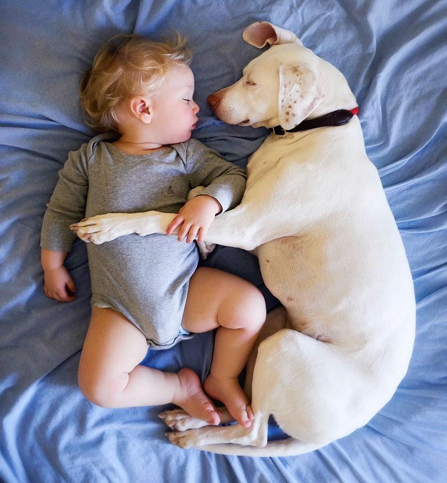 Cô chó bị bạo hành 'lột xác' trở thành vú em chuyên nghiệp