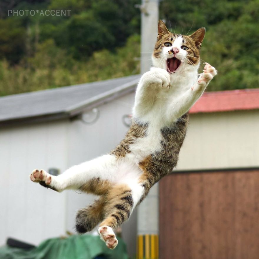 101 chiêu thức võ công của các ninja làng mèo tại Nhật