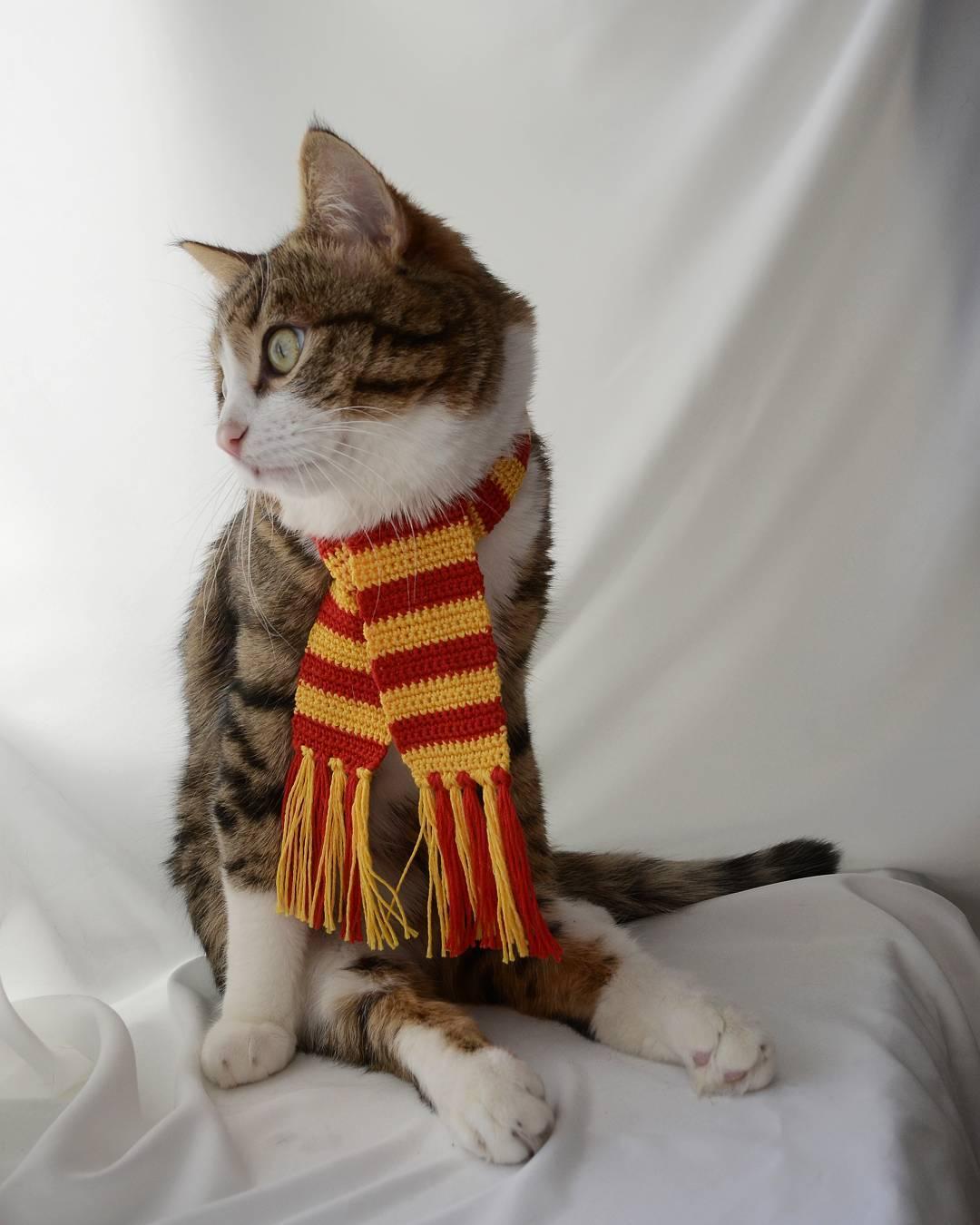 Rexie - Chàng mèo 'lưỡi cuốn' lạc quan nhất hệ mặt trời