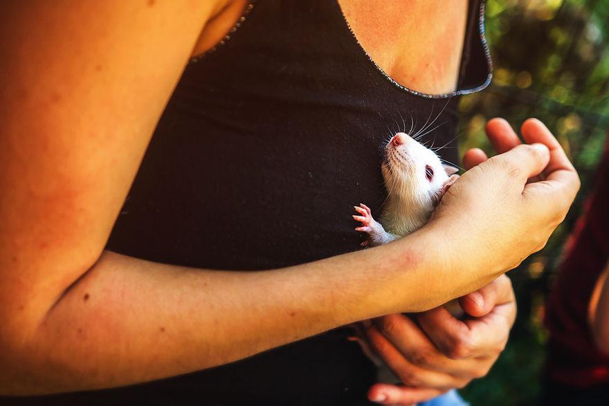 Lần đầu được hít thở khí trời của những chú chuột thí nghiệm đáng thương