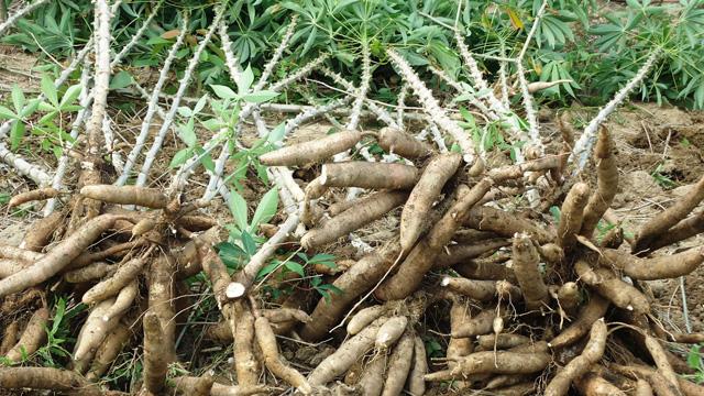 Câu hỏi khó với dân thành thị: Loại rau củ quả này đến từ đâu?