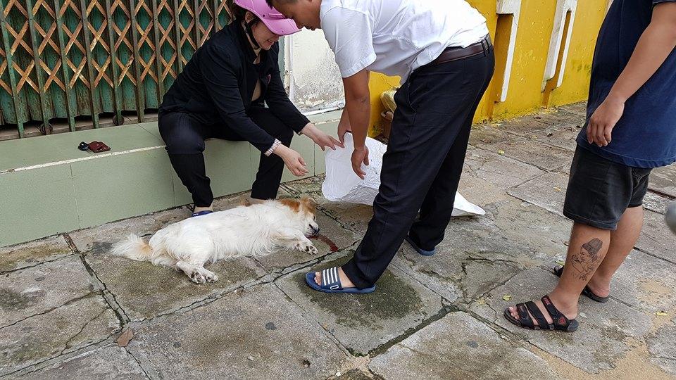 Thương chú chó bị xe cán chết, người dân Phú Yên chung tay làm đám tang