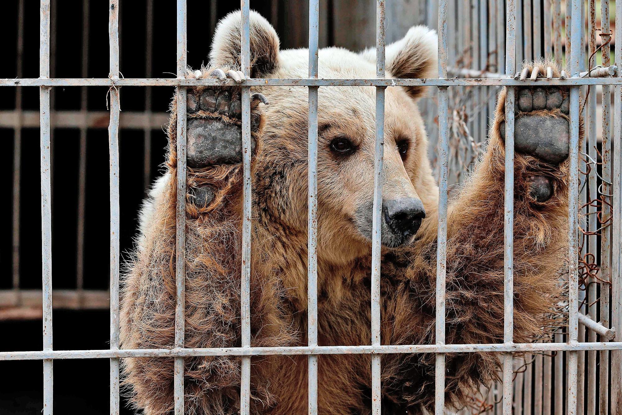'Sở thú trong mơ' hay ngôi nhà thiên nhiên thực sự cho động vật hoang dã