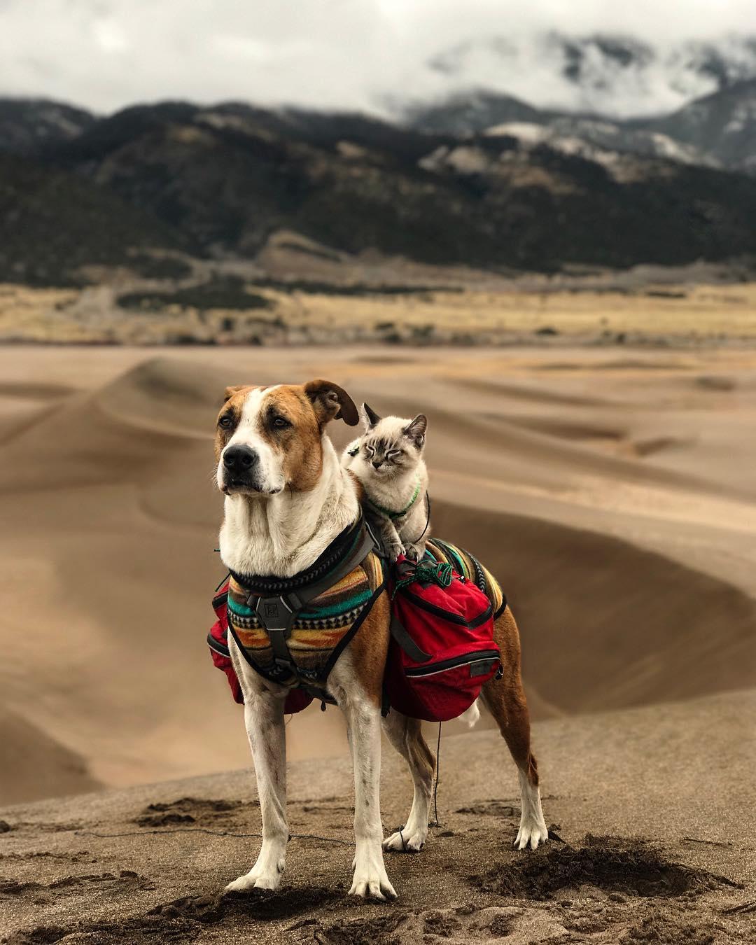 Loạt ảnh 2 chàng chó mèo đi du lịch cùng nhau khiến người người ganh tị