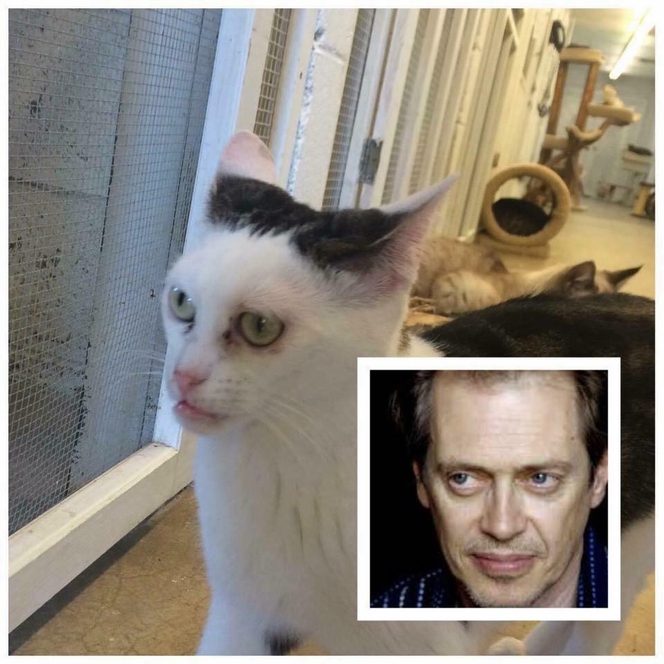 Chú mèo có khuôn mặt 'khó ở' giống hệt diễn viên Hollywood