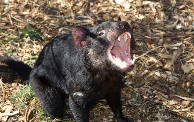 10 loài vật đáng yêu có thể... giết chết bạn trong vòng một nốt nhạc