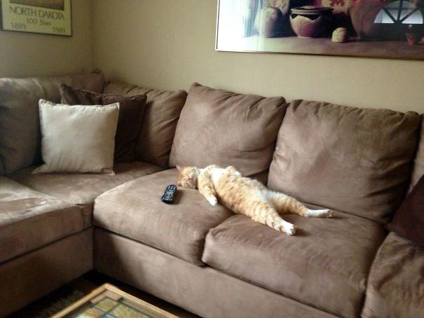 10+ tấm ảnh cho thấy mèo xứng đáng đoạt giải Oscar diễn viên xuất sắc nhất