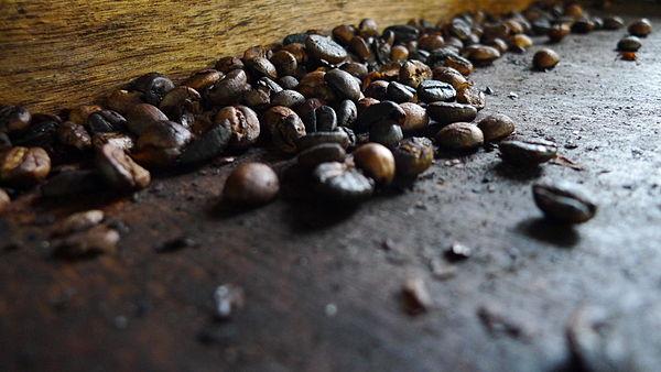 Cà phê chồn: Hành hạ loài vật để phục vụ sự đẳng cấp của con người