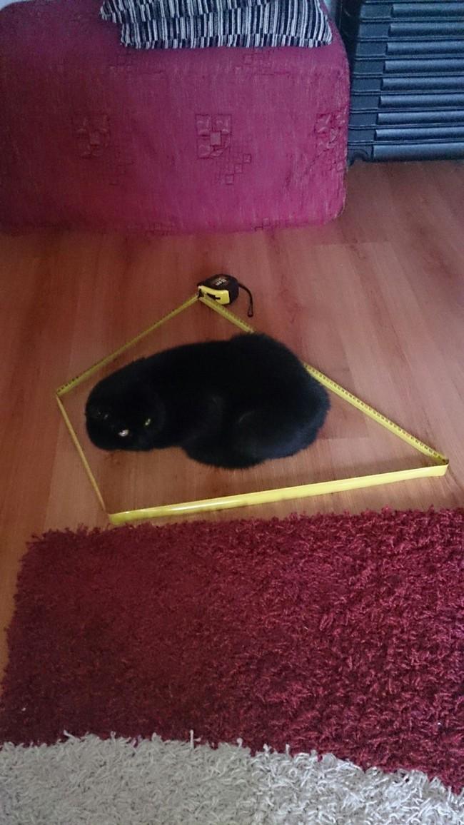 Muốn giữ boss mèo nằm yên, chỉ cần một vòng tròn là đủ