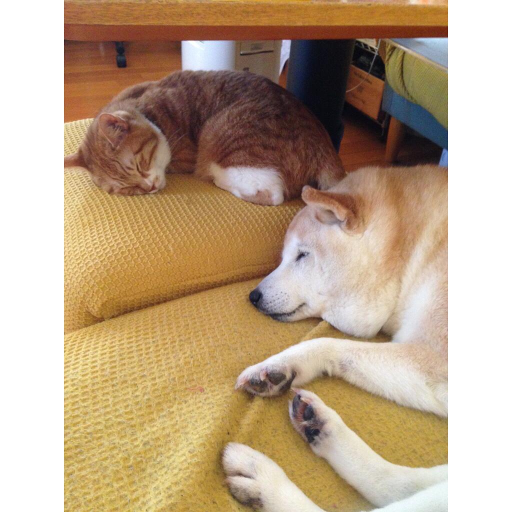 Trái đất tròn, ai bảo chó mèo thân thiết với nhau là điều không thể?