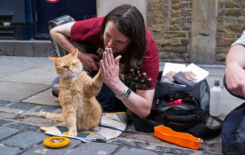 Bob - Chú mèo đường phố: Tại sao bạn nên đọc sách trước khi xem phim?
