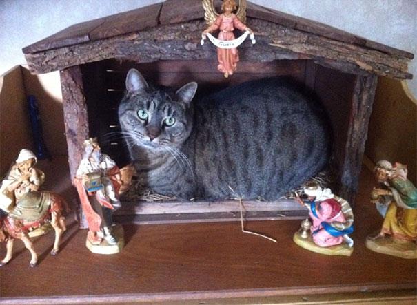 Nếu mèo thống trị Trái đất, chắc chúng sẽ xóa sổ ngay... lễ Giáng sinh