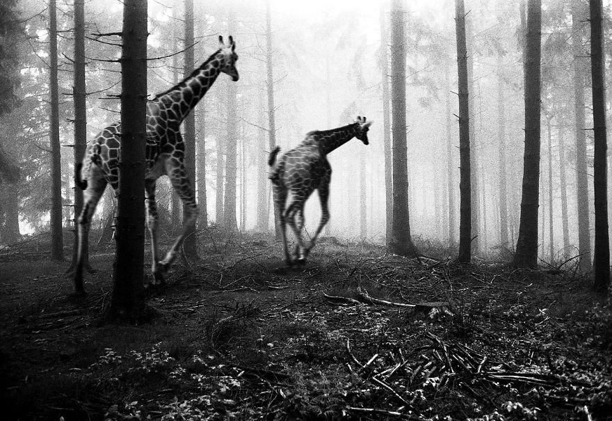 Giải thoát động vật trong sở thú bằng... Photoshop