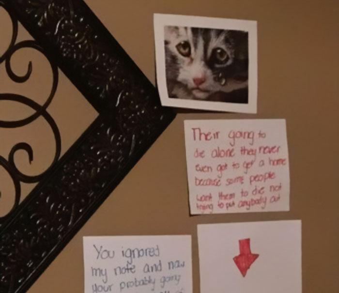Con gái năn nỉ bố cho nuôi mèo bằng cách mà ông bố nào cũng chào thua