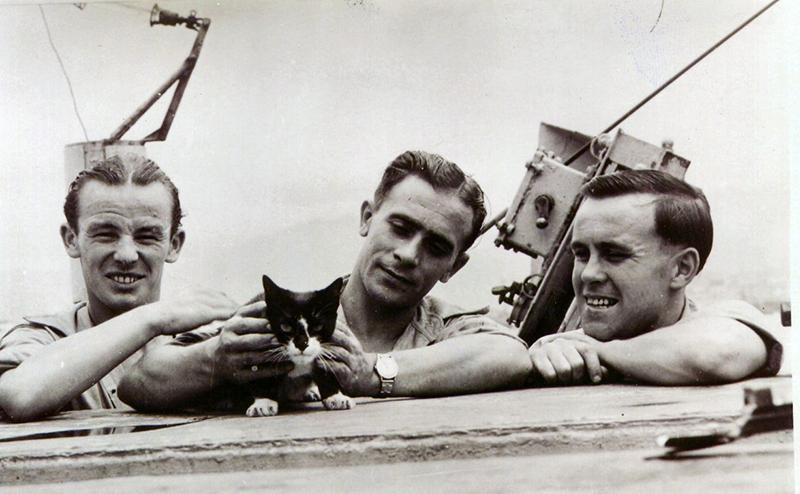 Simon - 'Chiến binh' mèo dũng cảm nhất lịch sử