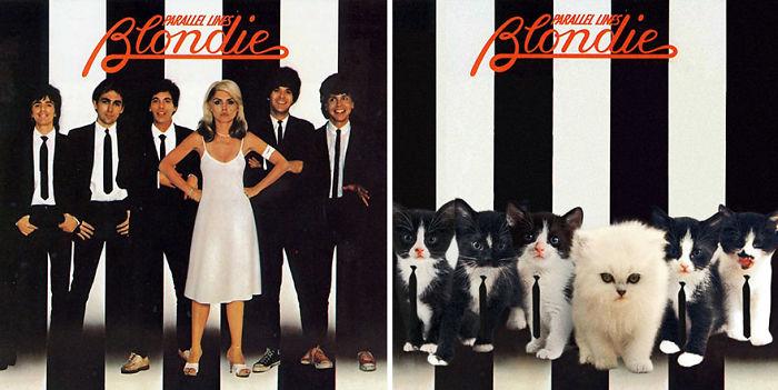 Mèo không chỉ thống trị thế giới, mà còn thống trị bìa đĩa CD nổi tiếng
