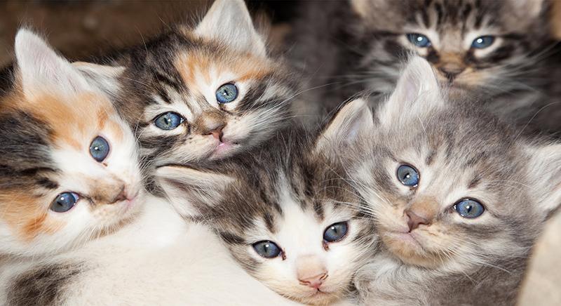 Không cần nhòm phía dưới, bạn vẫn biết được giới tính của mèo cưng bằng màu sắc đấy
