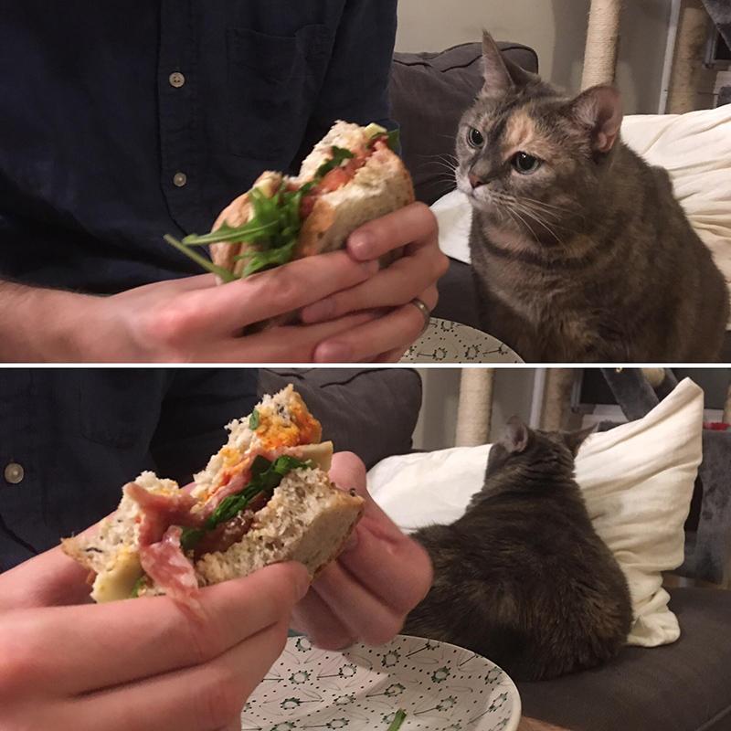 Mèo nghĩ gì về thế giới xung quanh?