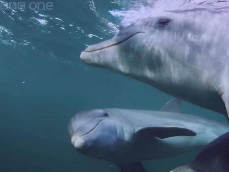 Khi cá heo cũng biết 'phê pha'