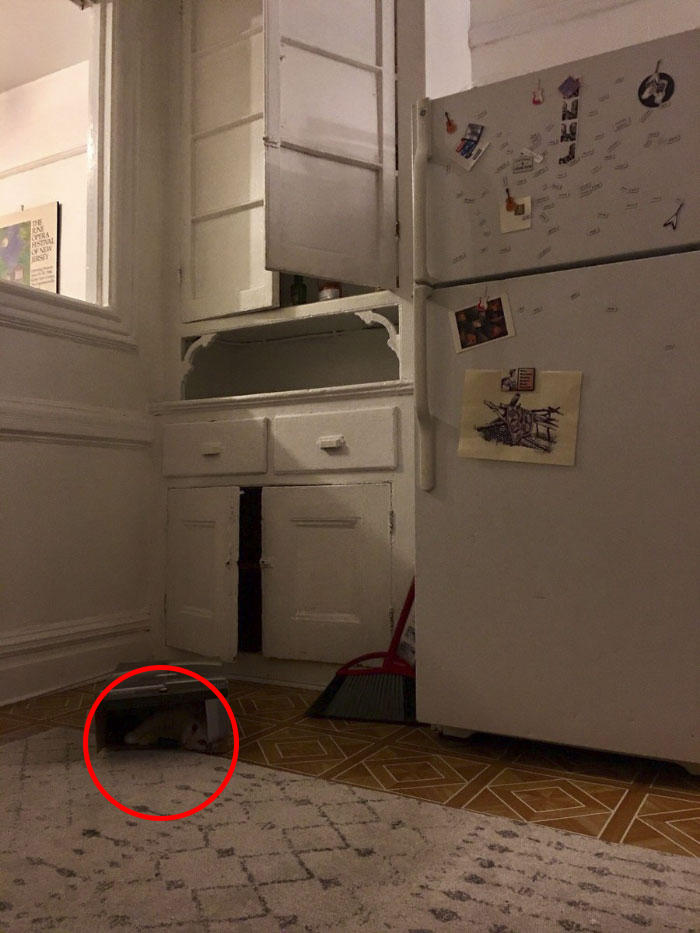 Cô chủ đăng ảnh 'thách' cư dân mạng tìm được boss mèo trong 5 giây