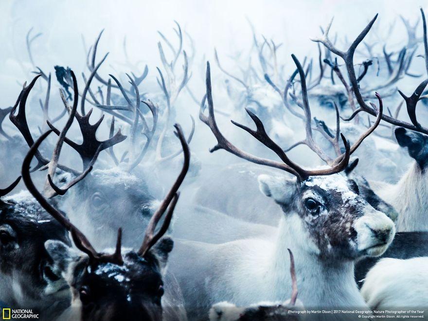 'Tan chảy' trước 20 bức ảnh thắng giải cuộc thi ảnh thiên nhiên National Geographic 2017
