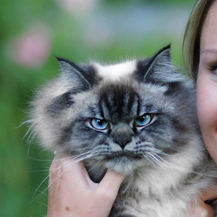 Gặp gỡ 'angry cat' hờn cả thế giới