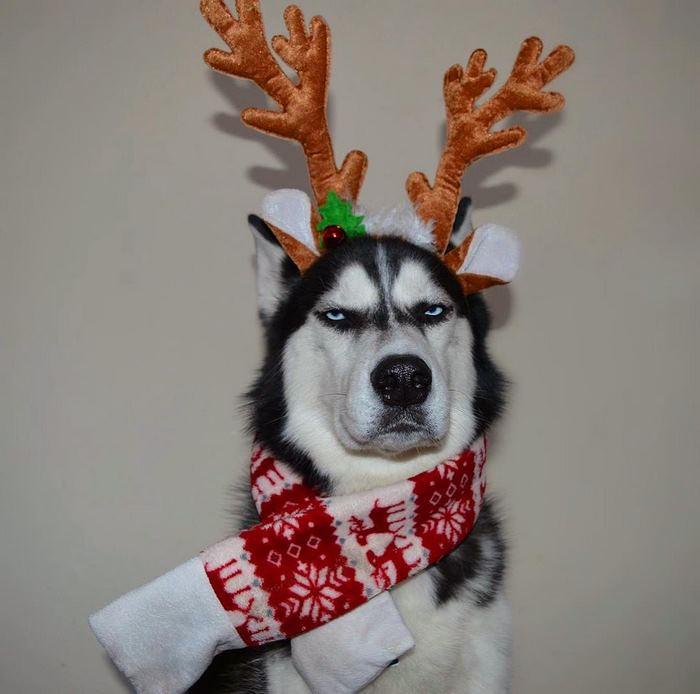 Mặc đồ Giáng sinh? Nhìn mặt anh xem có vui không sen?