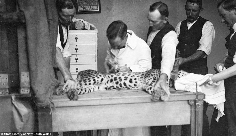 100 năm trước, các cụ yêu động vật đến mức nào?