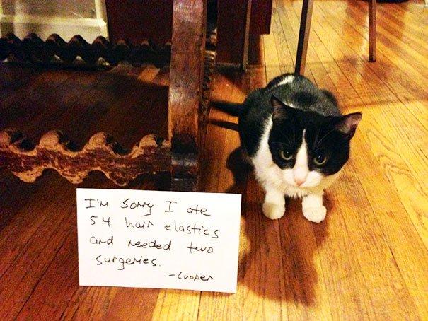 Khi lũ mèo 'thú tội trước bình minh' vì trót làm sen lao đao