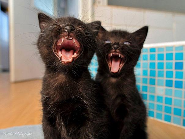 Những cặp song sinh trong thế giới động vật: Gấp đôi sự cute để làm gì?