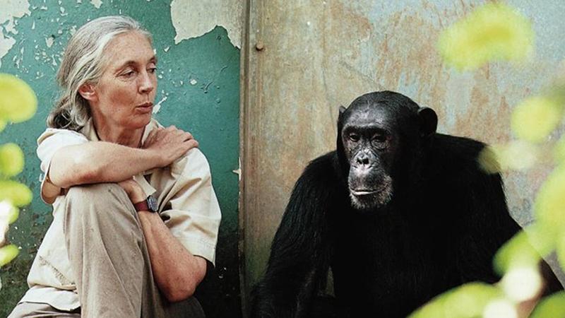 10 lần động vật góp phần thay đổi lịch sử loài người
