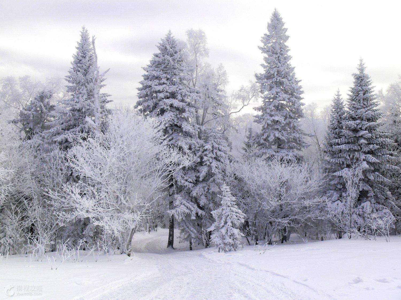 Chờ cả năm để được đến ngôi làng trong 'Bố ơi mình đi đâu thế' ngắm tuyết