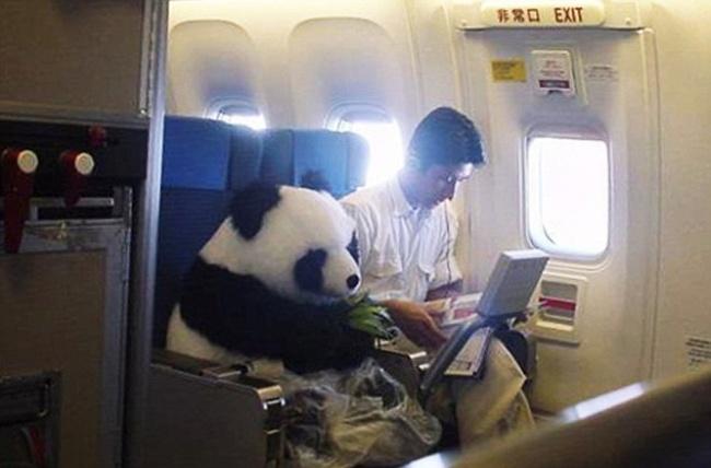Lần đầu đi máy bay, có phải bạn cũng biểu cảm thế này không?
