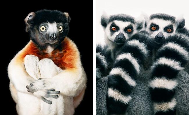 Tuyệt chủng: Nhiều năm sau, những loài vật này sẽ mãi mãi chỉ còn tồn tại trong ảnh