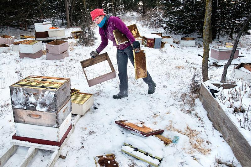 Tận diệt nửa triệu con ong mật, 2 cậu bé có nguy cơ ngồi tù... 10 năm