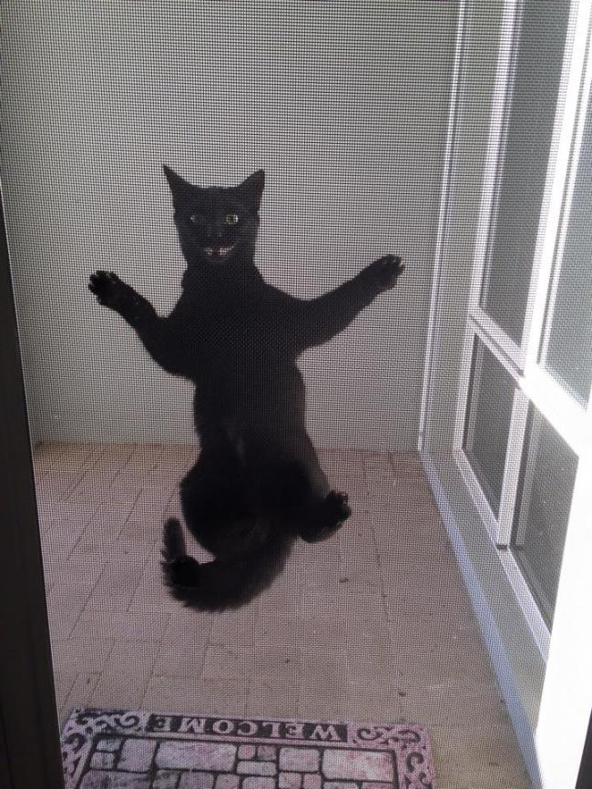 Mèo là loài vật khó ưa nhất thế giới, vậy sao con người cứ tranh nhau phục dịch chúng?