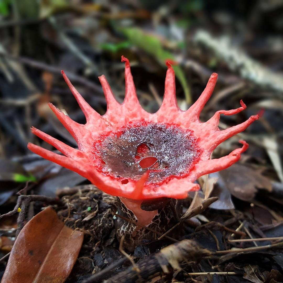 15 sinh vật 'í ẹ' của thiên nhiên khiến bạn té ngửa về thế giới muôn loài