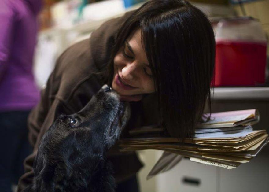 Chú chó quay trở về nhà sau... 10 năm đi lạc khiến cả gia đình choáng váng