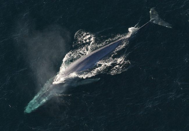 Hoá ra con người mới chỉ khám phá được 1% bí ẩn dưới lòng đại dương